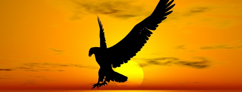 bird-freedom