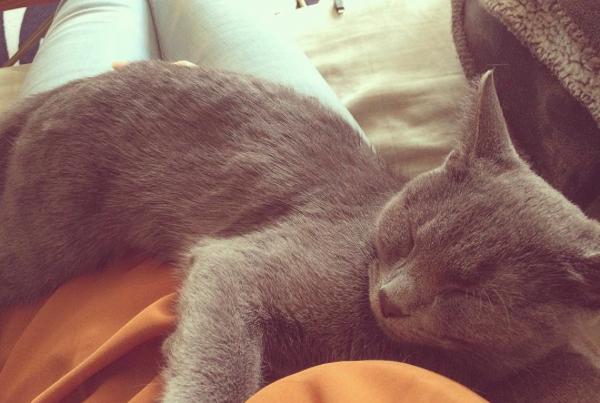 little-things-cat-hug