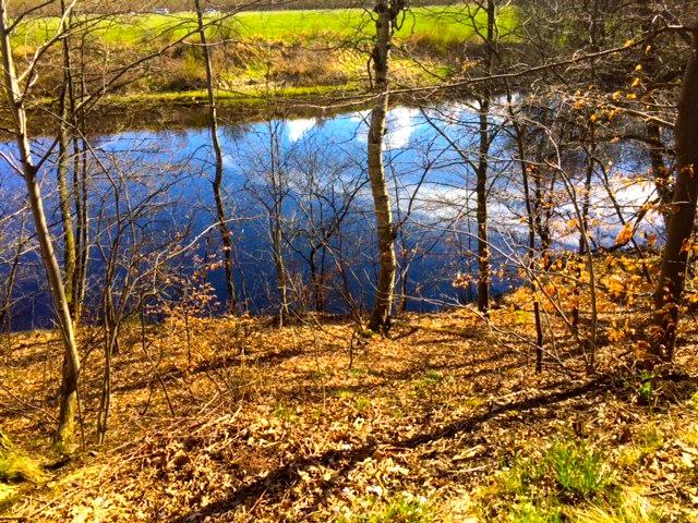 frennarp-forest-lake