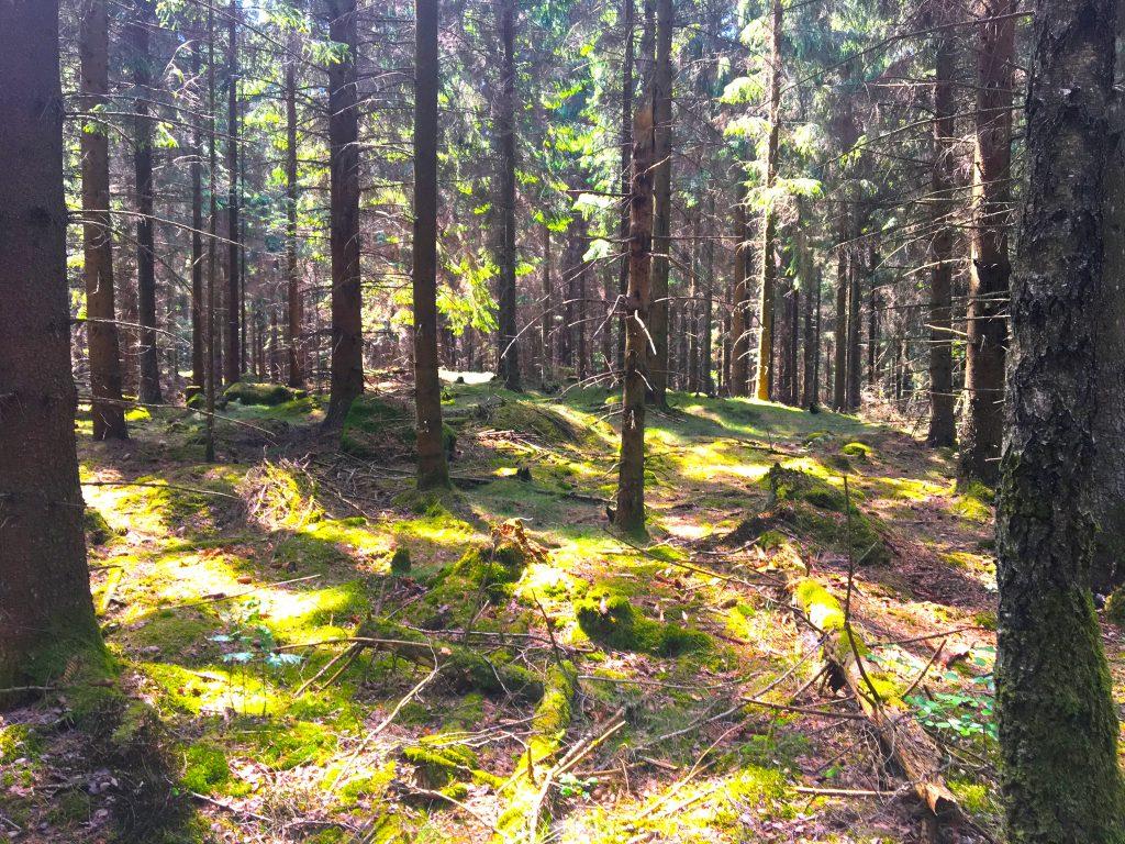Knivsåsen-forest