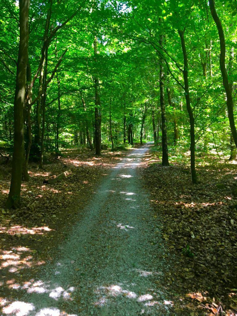 Skryllegården-forest-path
