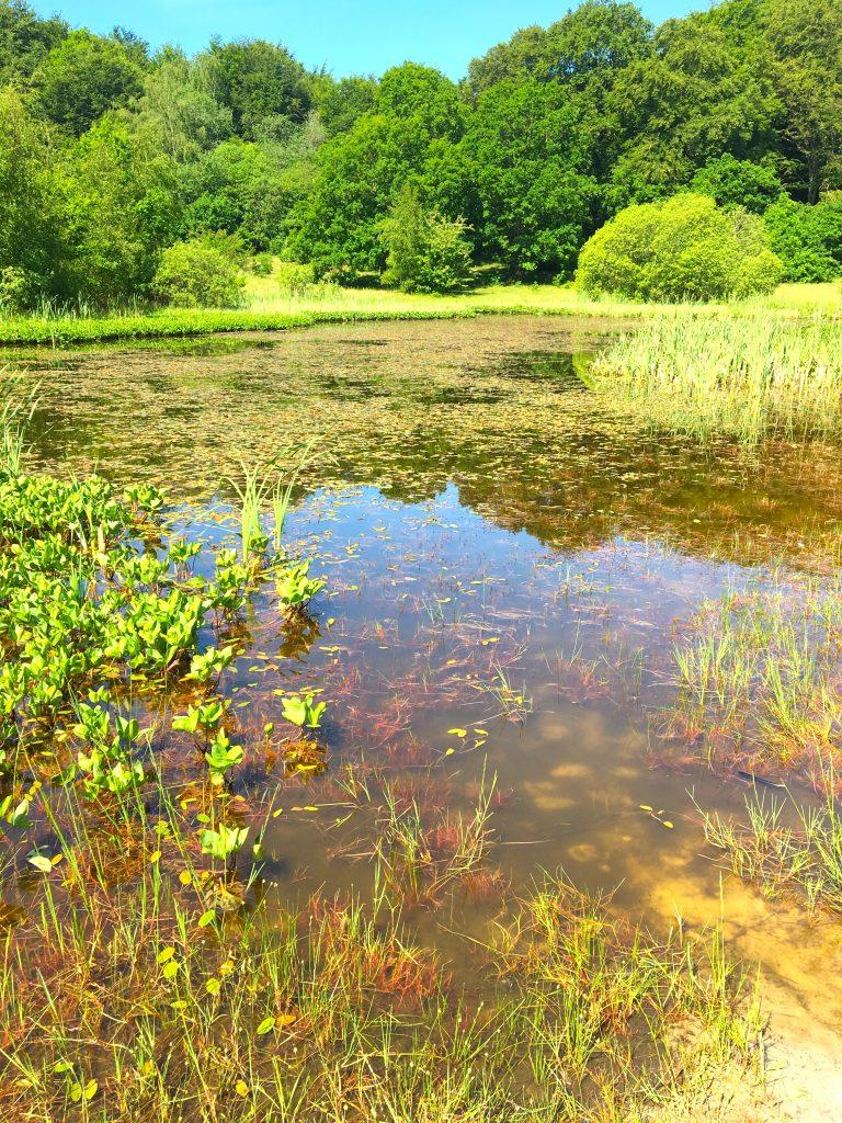 Skryllegården-swamp