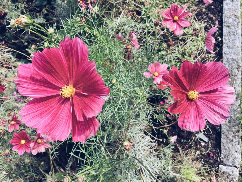 pildammsparken-flowers-1