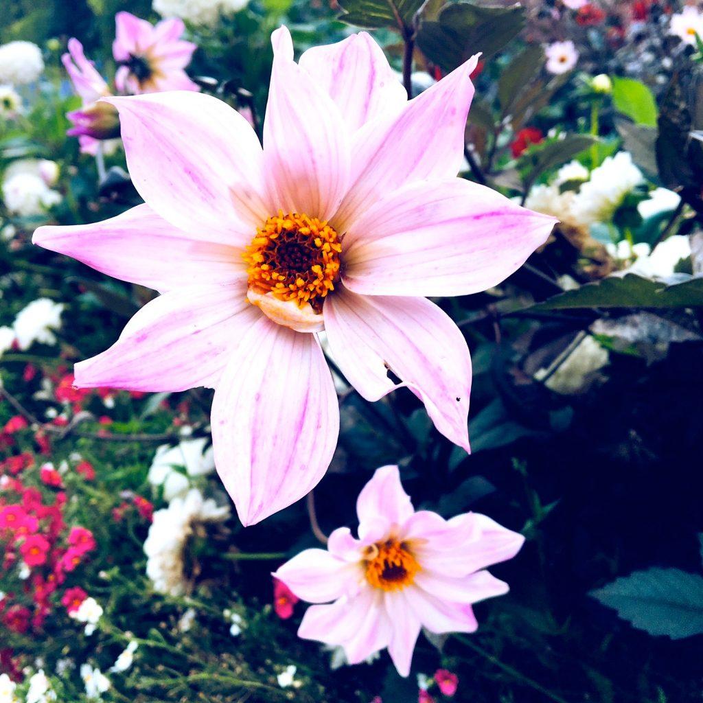 pildammsparken-flowers-2