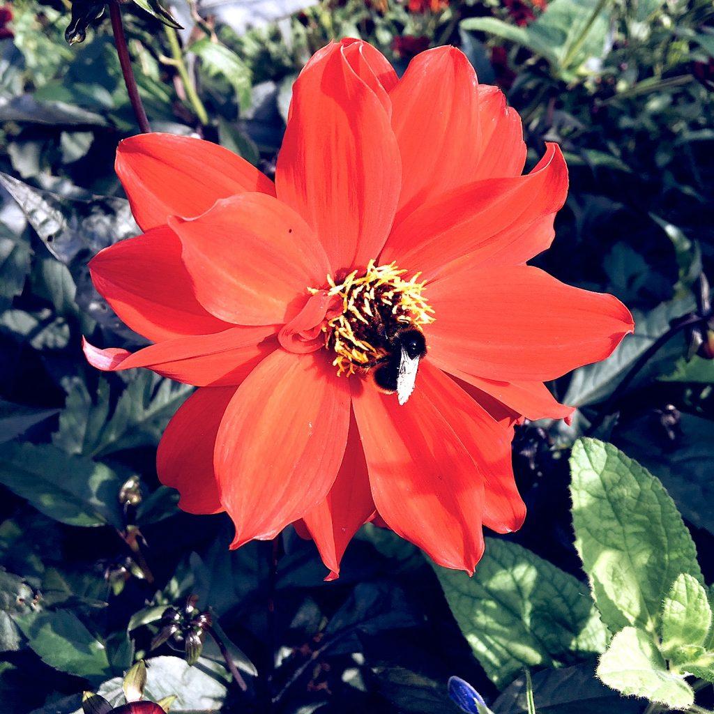 pildammsparken-flowers-3