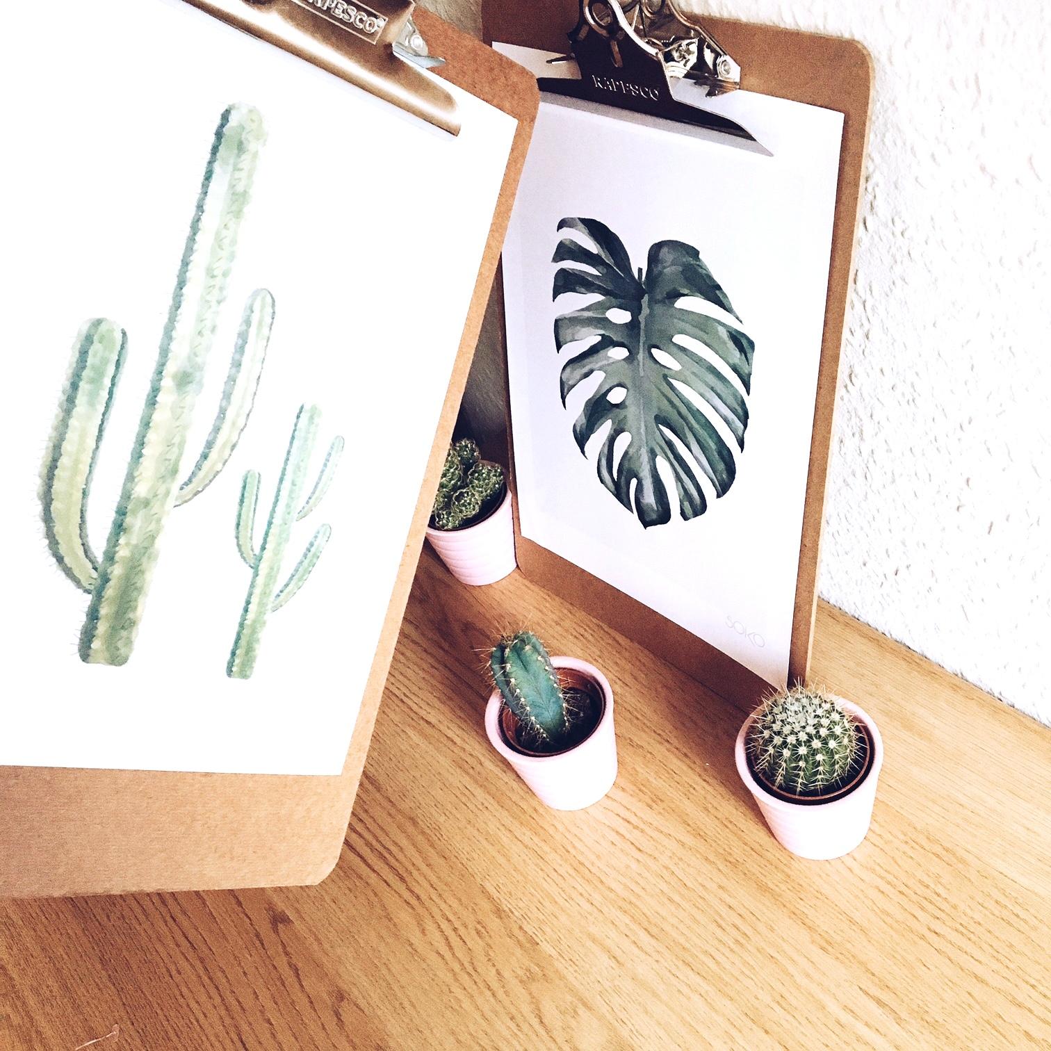 cactus-monstrera