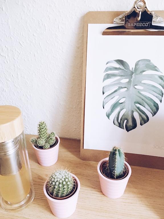 decoration-cactus