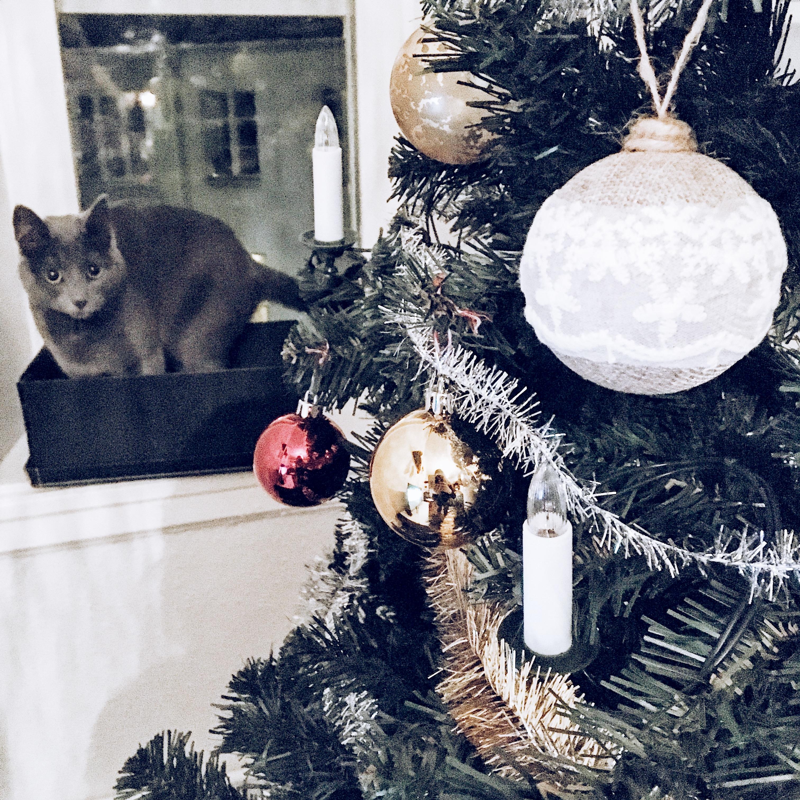 christmas-decorations-cat