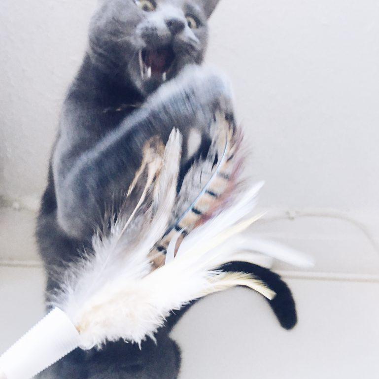 monthly-cat-box-2