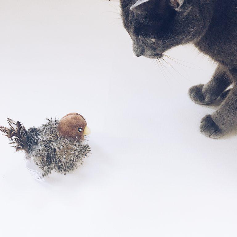 monthly-cat-box-5