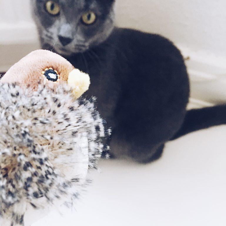 monthly-cat-box-4