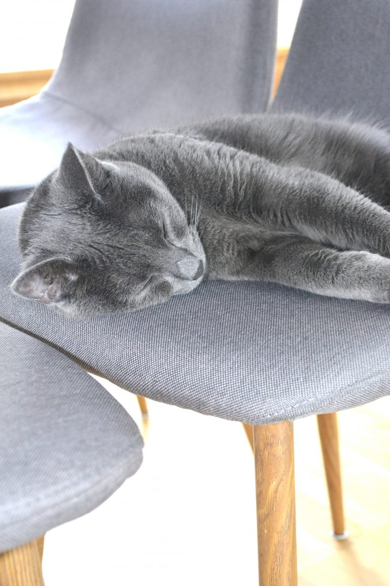 chat qui dort deco scandinave