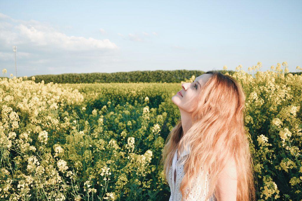 Golden hour dans les champs de colza
