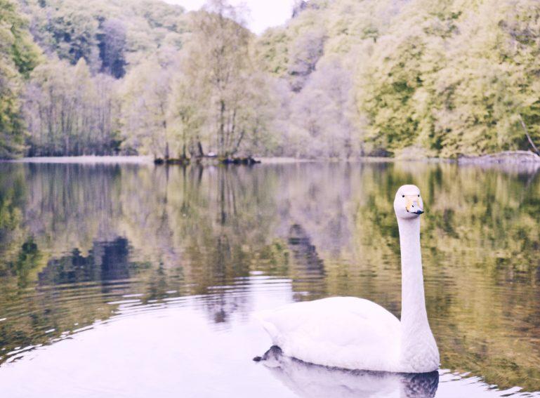 swan flowers sweden hiking