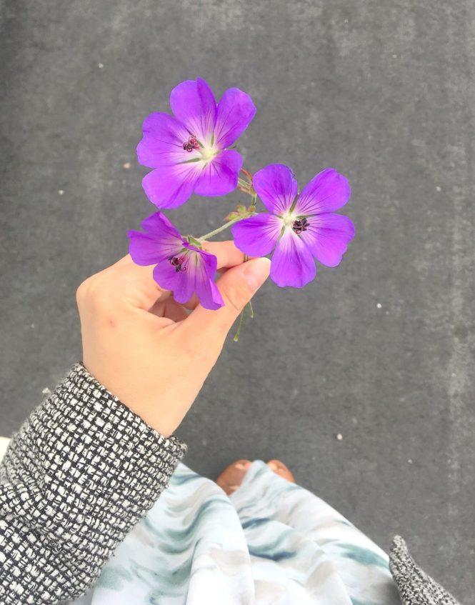 plocka blommor malmö