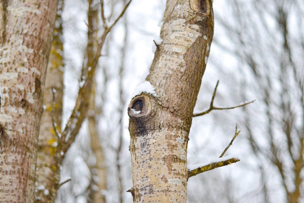 Quel climat en Suède en Janvier ? Et bien, un joli paradis blanc… mais pas partout