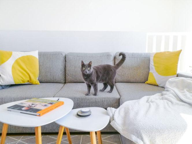cat on a sofa yellow pillows