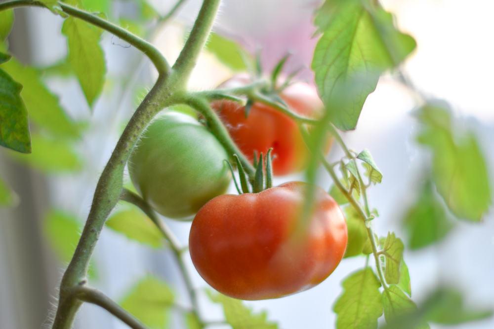 Comment jardiner en intérieur ? Tout ce qu'il faut savoir.