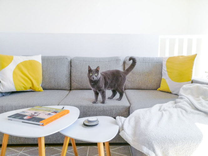 cat on a sofa yellow pillows